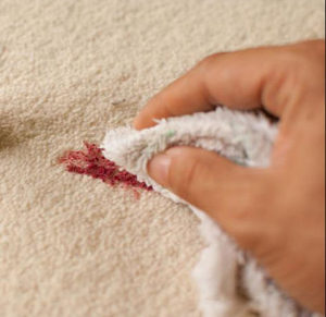 blotting to remove stains on carpet